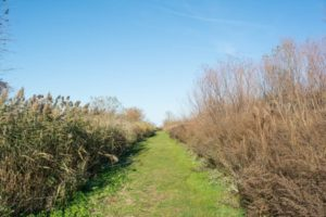 Claudia Fulton: The Cleveland Lakefront Nature Preserve